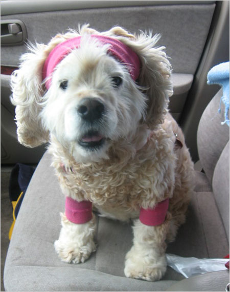 Sadie on her way to jazzercise.